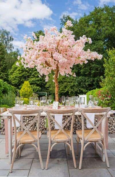 pink cherry blossom tree hire